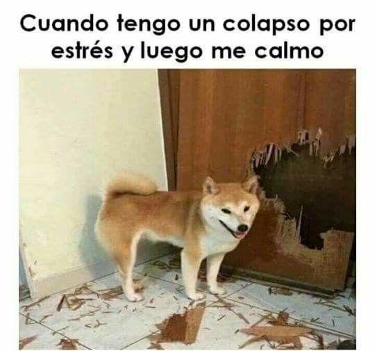 IMÁGENES DE RISA #lol #lmao #hilarious #laugh #photooftheday #friend #crazy #witty #instahappy #joke #jokes #joking #epic #instagood #instafun #memes #chistes #chistesmalos #imagenesgraciosas #humor #funny #amusing #fun #lassolucionespara