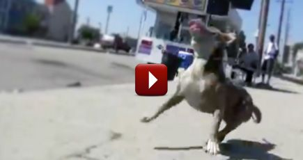 A Dangerous Dog Rescue Has the Happiest Ending You Could Ever Imagine - Just Watch!
