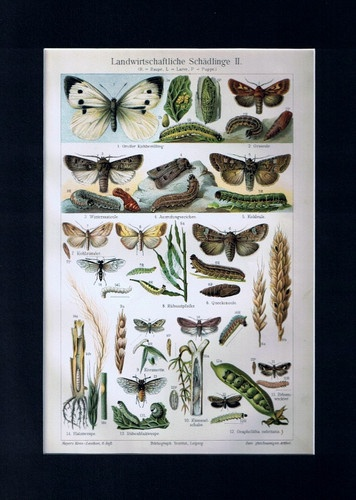 Antique Print Insects Bugs Agricultural Parasites Germany Meyers 1905 $14.99