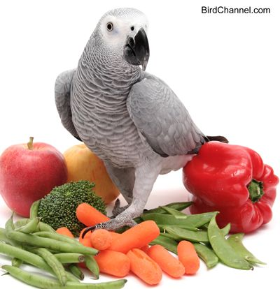 What are the best foods for your African grey parrot? Find out in this article.
