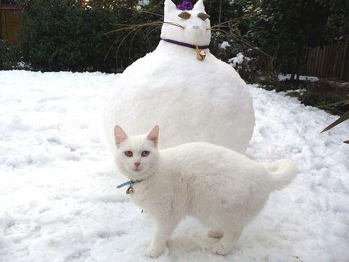 snowmancatFunny Cat, Snow Cat, Fat Cat, Dr. Who, So Funny, Snowcat, Kitty, Animal, White Cat