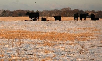 Cattle Ranch & Herding News, Beef & Cattle Futures Prices | Beef Today