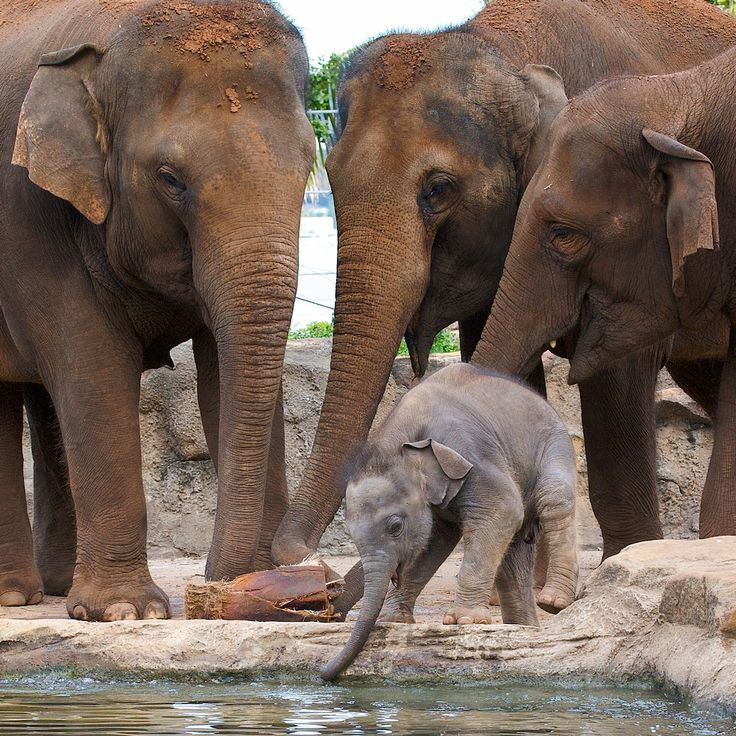 'Baby Elephant' by Tanya Puntti (SLR Photography Guide), via Flickr