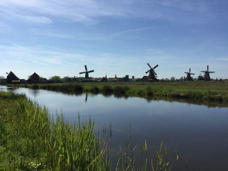 Dutch #windmill