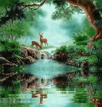 Natureza e Vida Selvagem Gráficos e Comentários