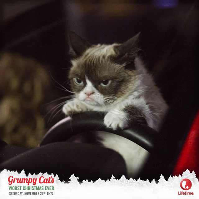 Grumpy Cat Birthday Youtube: 17 Best Images About Grumpy Cat Animation On Pinterest