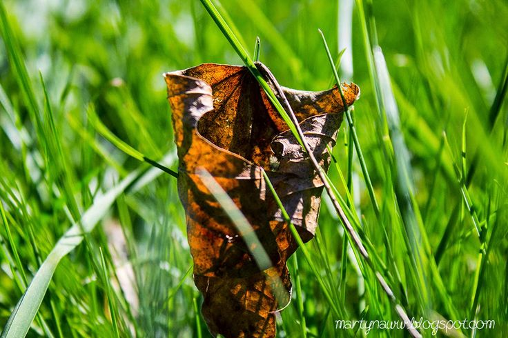 Twisted leaf on the grass / Spring