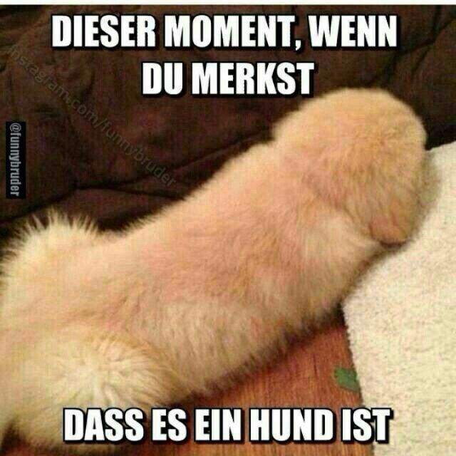 Dieser Moment wenn du merkst dass es ein Hund ist