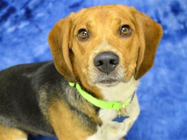 Osiris Oregon Humane Society Humane Society Pets Pet Adoption