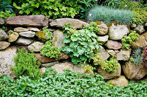 how to grow plants in a rock wall