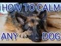 This series of training videos is wonderful! He has such a good process with the clicker and teaches very specifically on each video. I give this a 98.5 on best videos for clicker training!!!