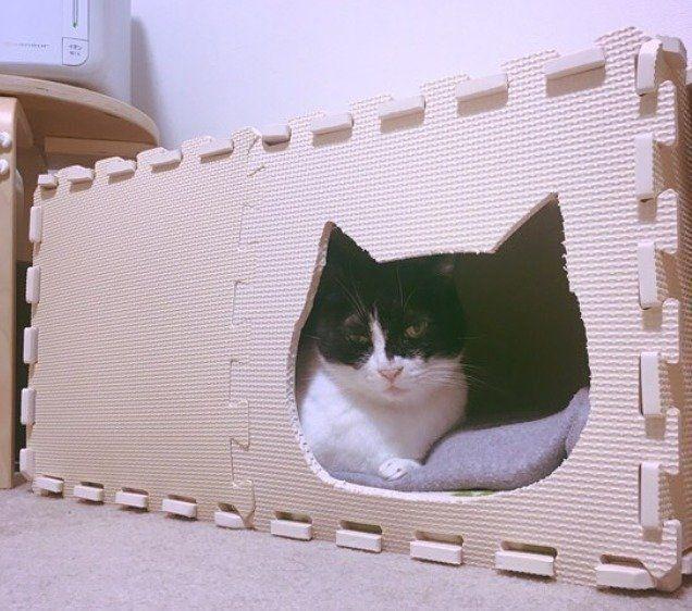 100均材料で猫ハウスを手作りしよう 猫飼いプチdiyのススメ ねこのきもちweb Magazine 猫ハウス 猫 ハンモック 手作り 猫 こたつ