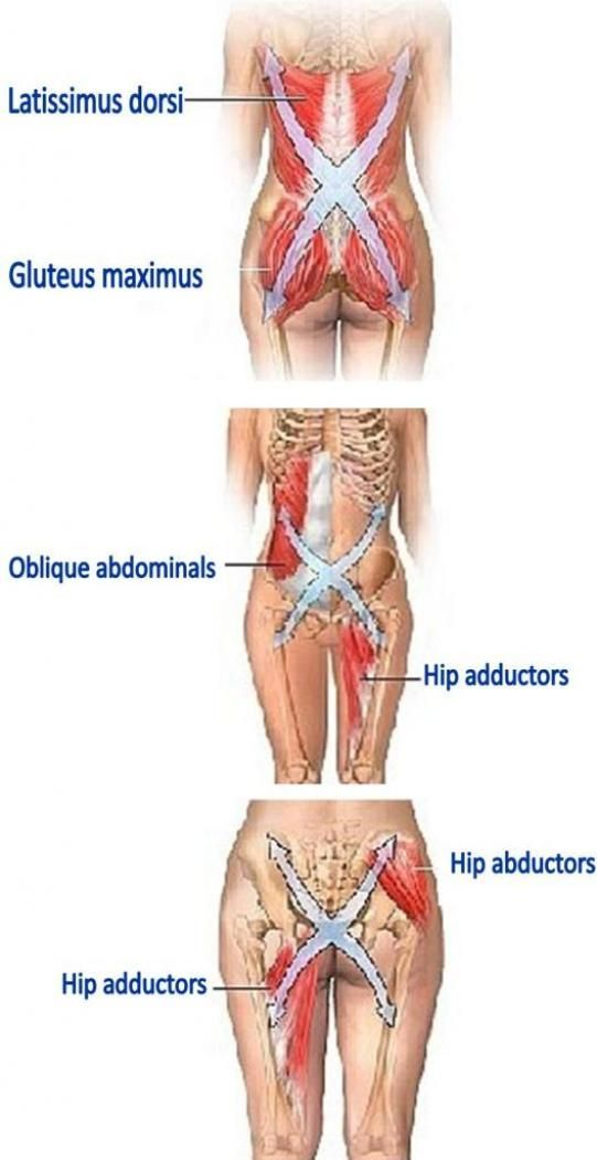 Shows how they are all connected. I think my pain is more like the top picture Ribs down to the lower joint area of my hip. It's crazy how it's all inter-connected