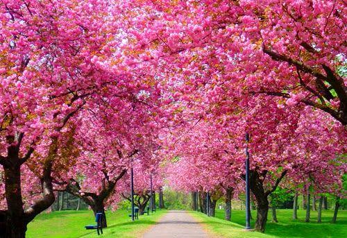 Behind Kaleidoscope Eyes: Spring ❤