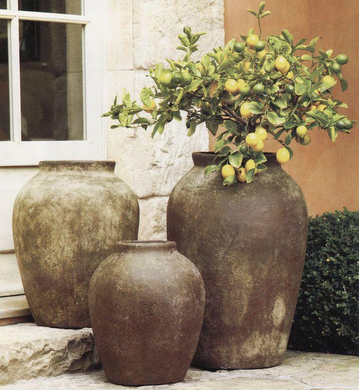 More dwarf citrus. Love them in large aged olive jars.