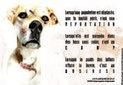 animaleries importations trafic et hécatombe de chiens des pays de l'est, duprat, ma griffe, animal express,vente de chiots et de chatons malades, maladie de carré, toux de chenil, parasites, embol...