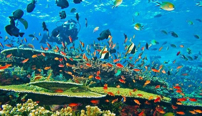 Taman Nasional Laut Bunaken Yang Mempesona