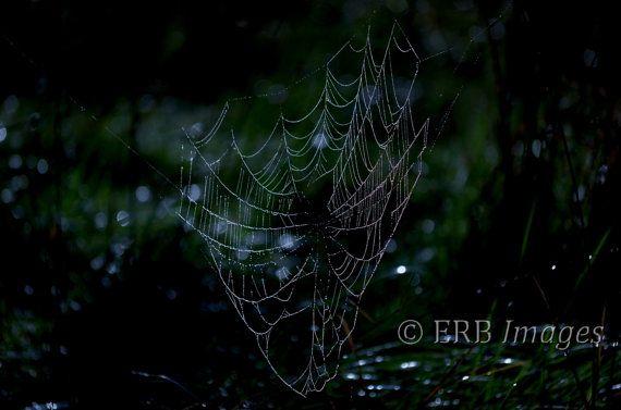 Midsummer Eve 8x10 Fine Art Photograph spider web by ThoreauFair, $20.00