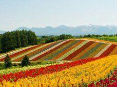北海道美瑛町の四季彩の丘は一度は見ておきたい絶景 雄大な大雪算連峰を臨む丘の上に7haの花畑が広がり眺望抜群です 視界一杯に広がるカラフルな花畑は圧巻そのものですね 春から秋まで30種類の花を見ることができますよ オフシーズンでも大丈夫冬はバギースノーモービルで遊ぶことができるんですよ ぜひカップルで行って欲しい絶景スポットです  #北海道 #四季彩の丘 #花畑 tags[北海道]