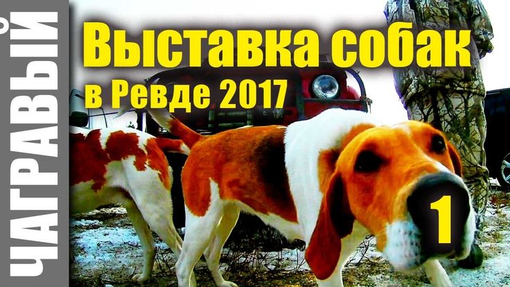 Выставка собак в Ревде 2017 | часть 1 | A large exhibition of hunting dogs in Russia | Part 1