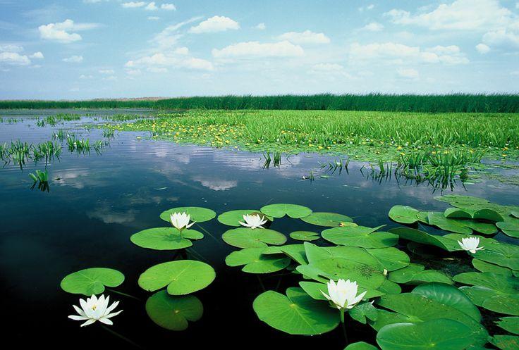 Tisza-tavi Ökocentrum és Vízi sétány / Ecocentre & Water Walkway at Tisza Lake (hnp.hu)