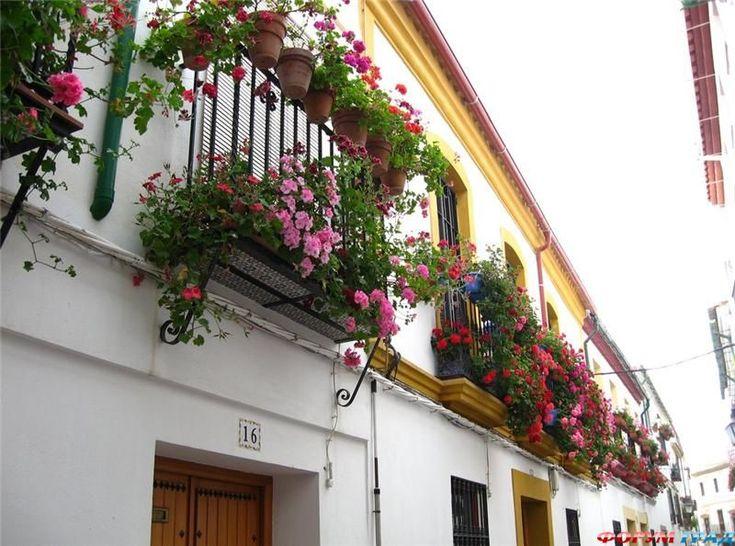 В Европе окна все в цветах – у россиян восторг в глазах - Для украшения террас и балконов выберем здесь красоту зеленую - Форум-Град