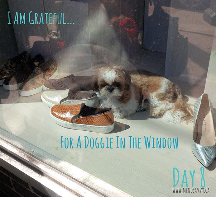 I'm so lucky I managed to notice this cute little thing in the window display!  #gratitude #cuteness