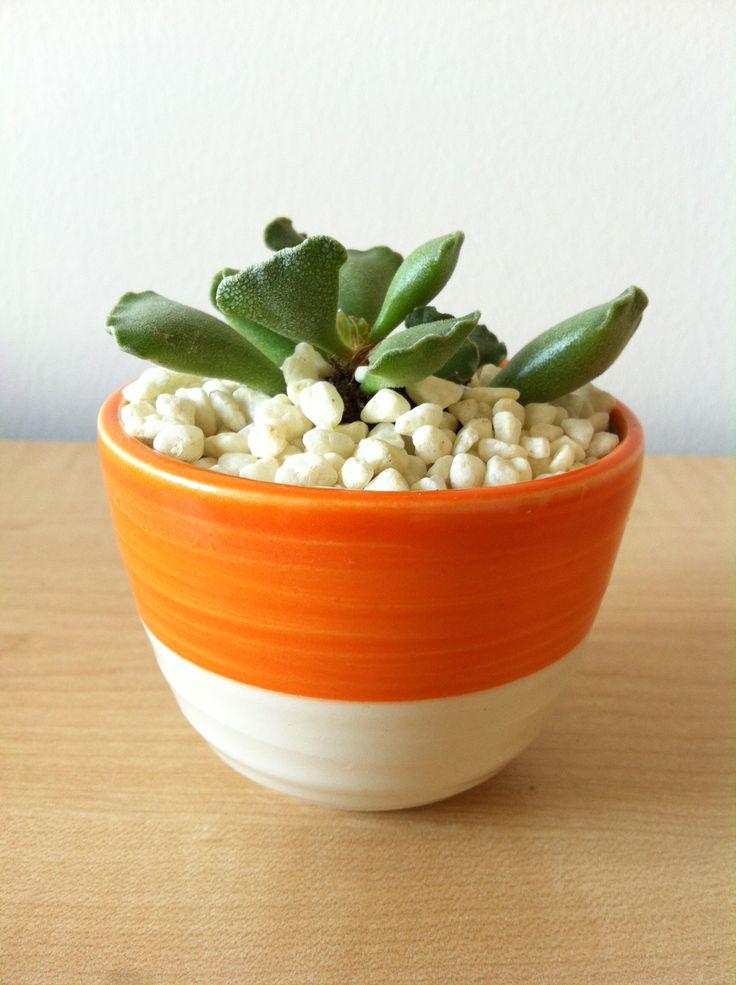 Succulente www.plantites.com