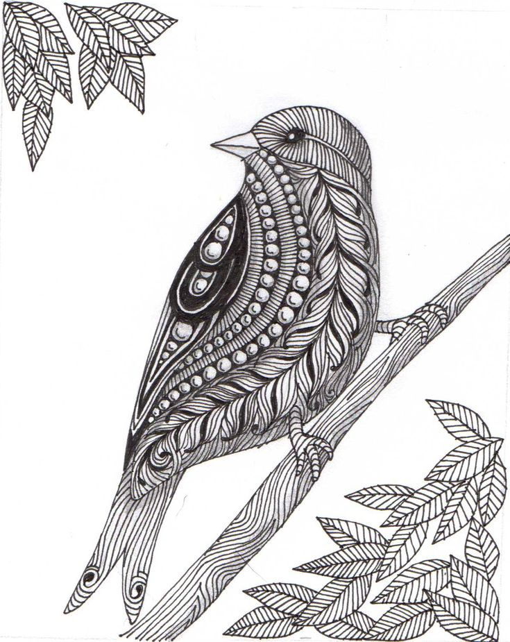 zentangle birds - Google Search