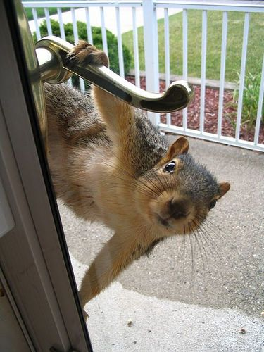 Cute funny squirrel - Hello, Mrs. Piper The birds want me to tell you the feeder's empty.: Funny Animals, Hello, Squirrels, Bird Feeders, Funny Stuff, Humor, Funnies, Birds
