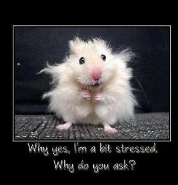 Me on a daily basis!