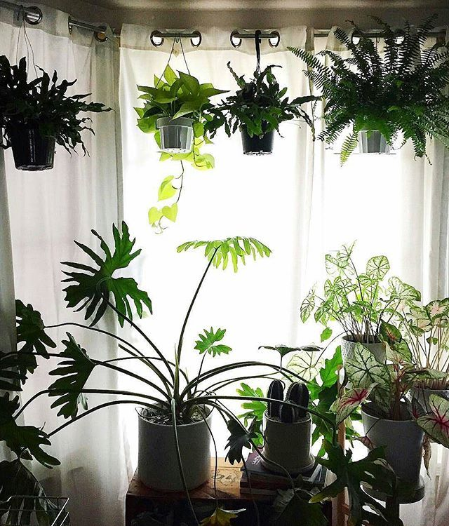 WEBSTA @ growstuffdaily - Idea: han plants from curtain rods @Regrann from @pistilsnursery - Thanks for reminding us again and again that plants make the best roommates. This lovely little vignette comes from the lush feed of @foliacollective We share a new photo from #InteriorRewilding each week. Tag your indoor green wonderland for a chance to be featured! #Regrann