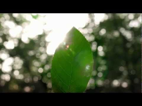 ▶ Save costs with HOMAG Group ecoPlus - YouTube