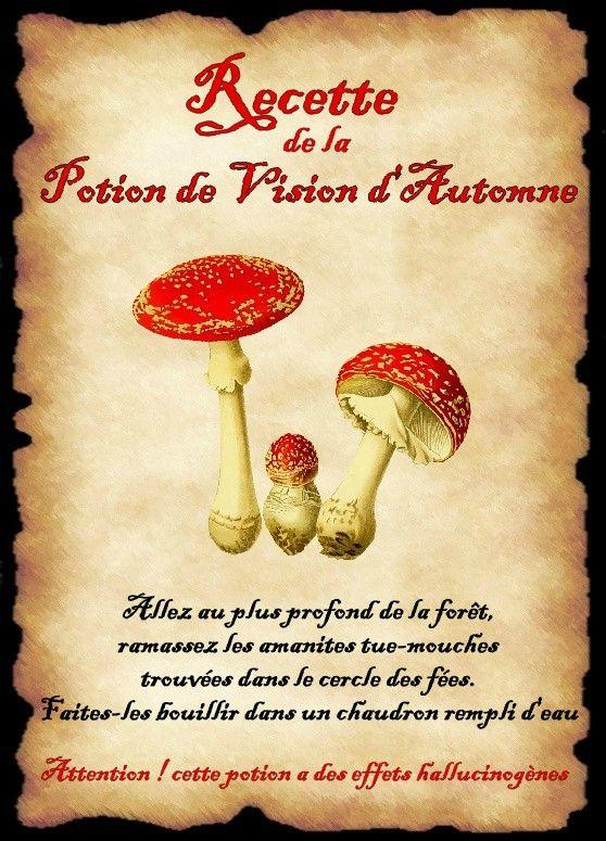 affiche champignons