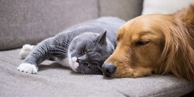 Chlupy z našich zvířecích mazlíčků nám někdy dokážou pořádně znepříjemnit život.