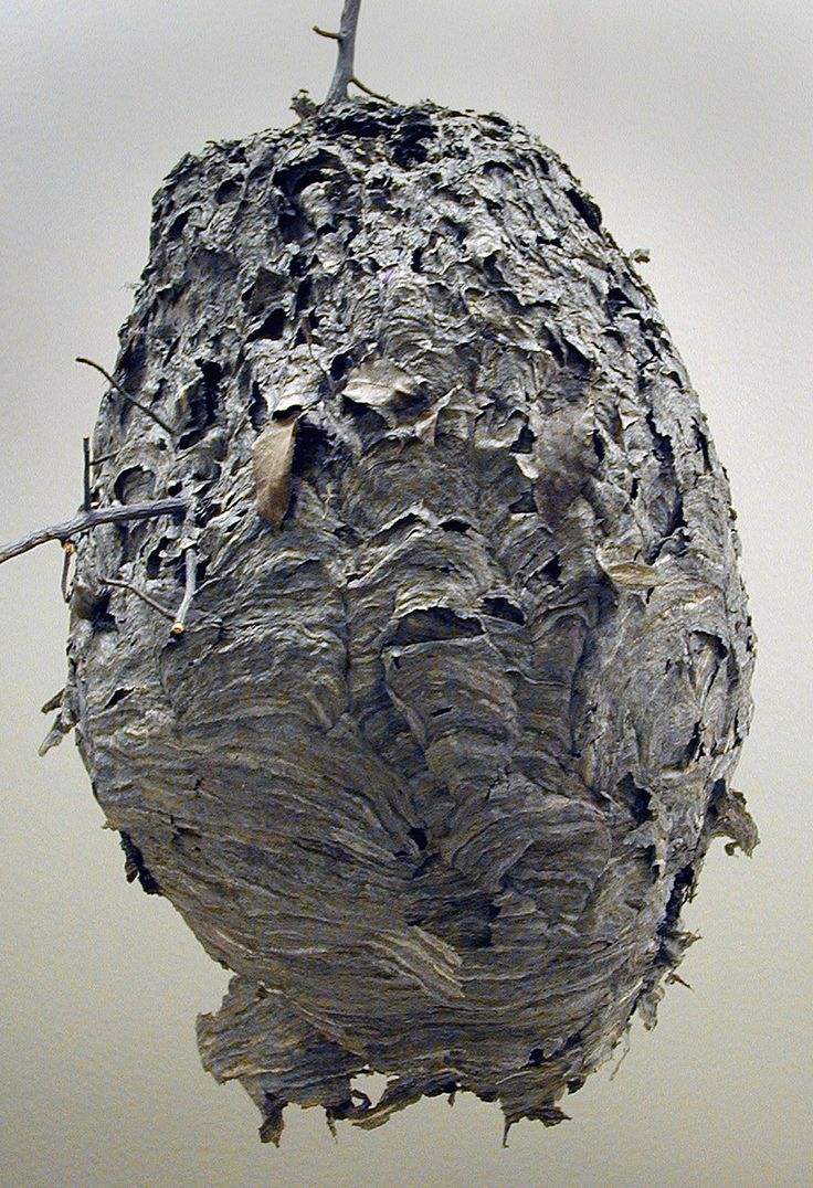 Wasp nest - and this is exactly how I am feeling...