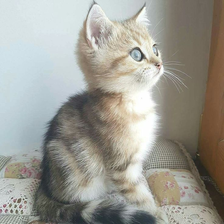 A fuzzle (kitten) apparently gazing out a window