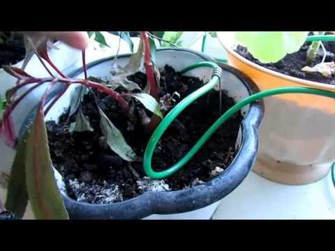 Автоматический полив  растений.Или как не загнуться в сезон рассады..