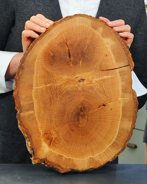 Fallen Tree Cutting Boards - must try the next time we cut wood for the fire!