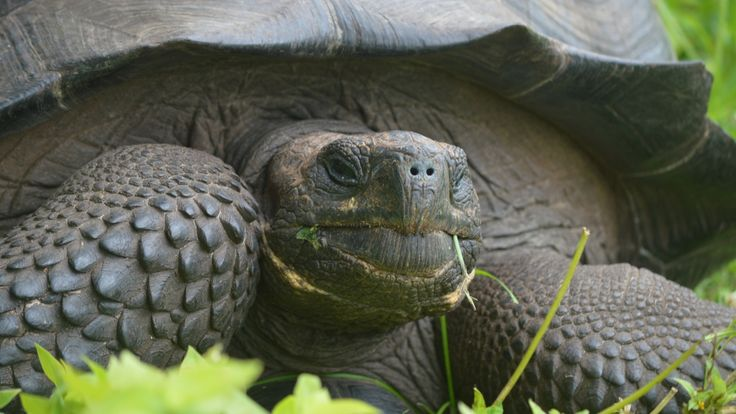 Giant tortoise, huge carnivorous plant among Top 10 new species of 2016 - Technology & Science - CBC News