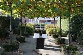 Dakplataan google zoeken tuinen pinterest tuin - Arbor pergola goedkoop ...