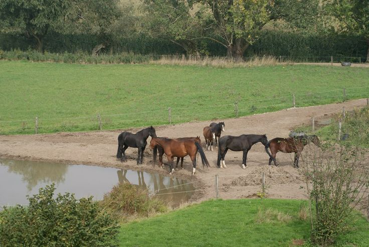 Watering hole on track