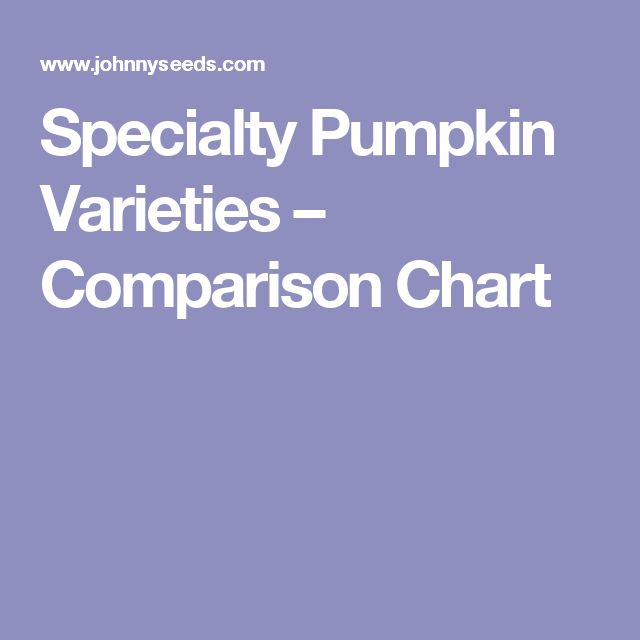 Specialty Pumpkin Varieties – Comparison Chart