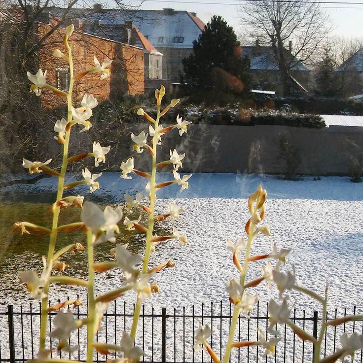 Na parapecie wiosna za oknem trochę mniej... #spring inside vs #winter outside