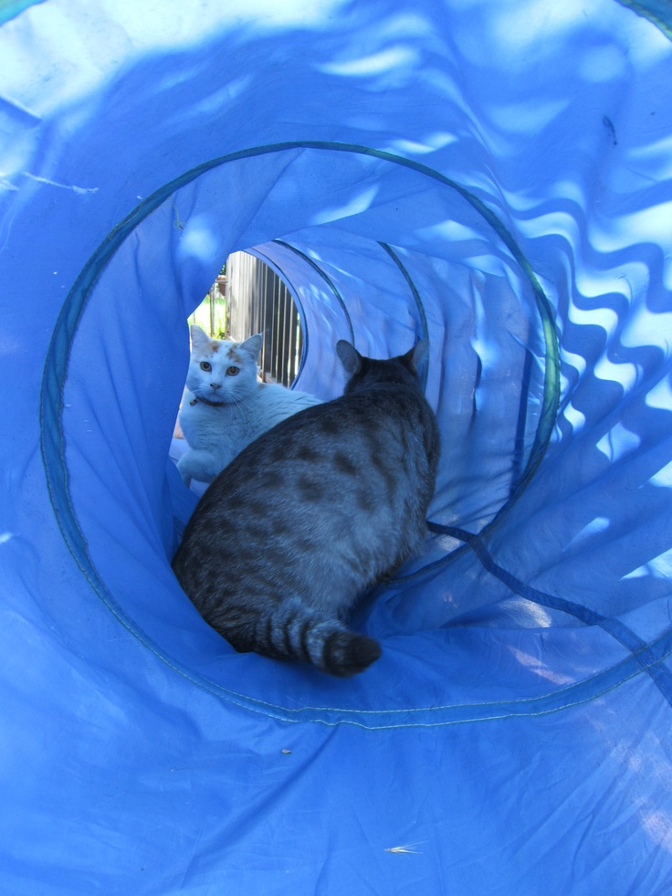 Two cats met in a blue tunnel...outcome uncertain.