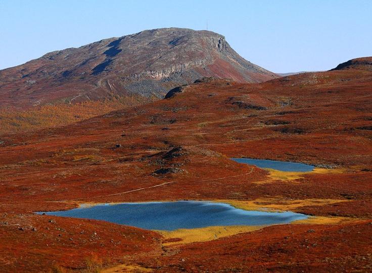 Ruska, fall colours in Lapland, Finland. photo by Tarmo Heinänen