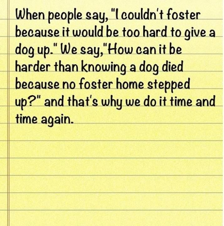 Please foster a dog!  Contact your local shelter!