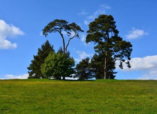 Újdonság: Adj támaszt a növényeknek, http://kertinfo.hu/adj-tamaszt-a-novenyeknek/, ezekben a témakörökben:  #Gyümölcsös, írta: Szépzöld