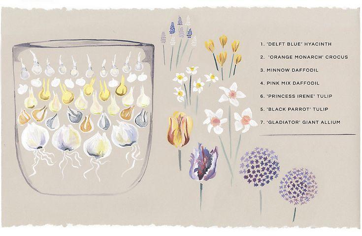 25 Best Ideas About Garden Bulbs On Pinterest Planting