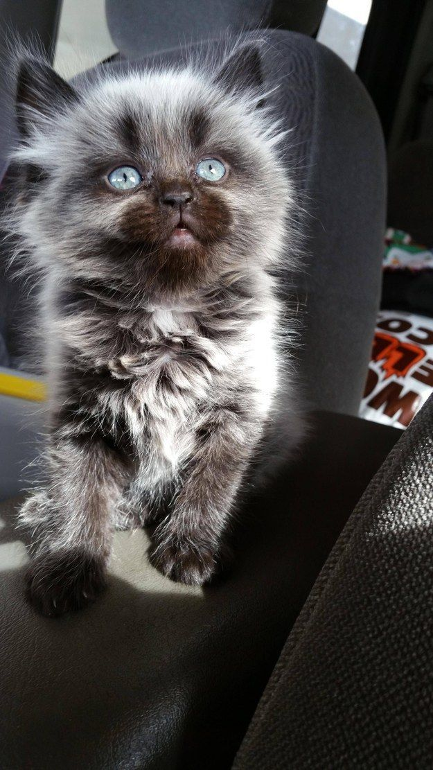The kitten who holds the universe in her eyes. | 21 Very Important Kitten Pictures You Need To See